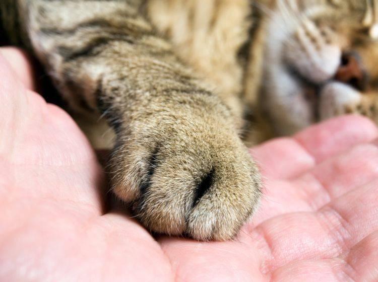Wer seine Angst vor Katzen überwinden will, nähert sich den Fellnasen am besten langsam an – Shutterstock / Sinisa Botas