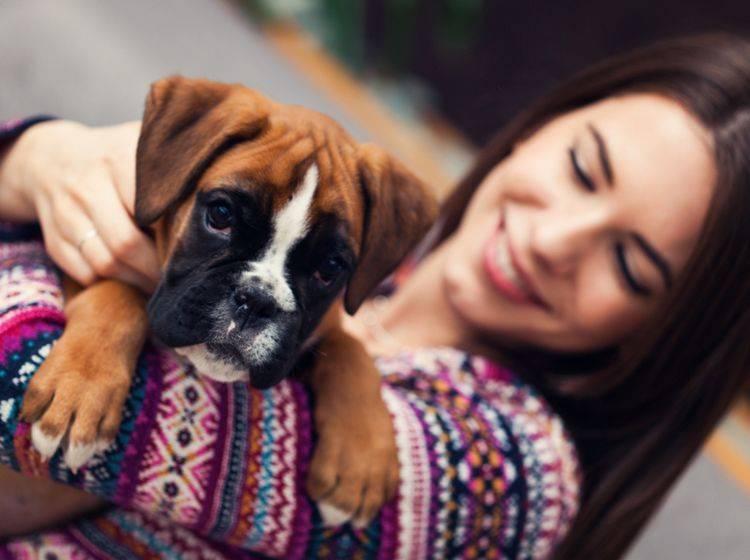 """Boxer sind sehr lange """"Kind"""" und bleiben es irgendwie auch ein Leben lang – Shutterstock / VITA PIX"""