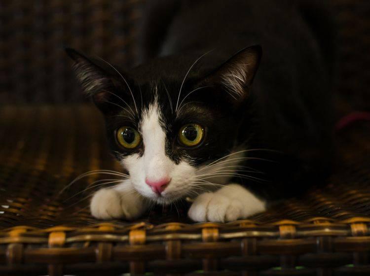 Wenn Katzen sich bei Gewitter zurückziehen, sollten wir sie in Ruhe lassen – Shutterstock / kowit1982