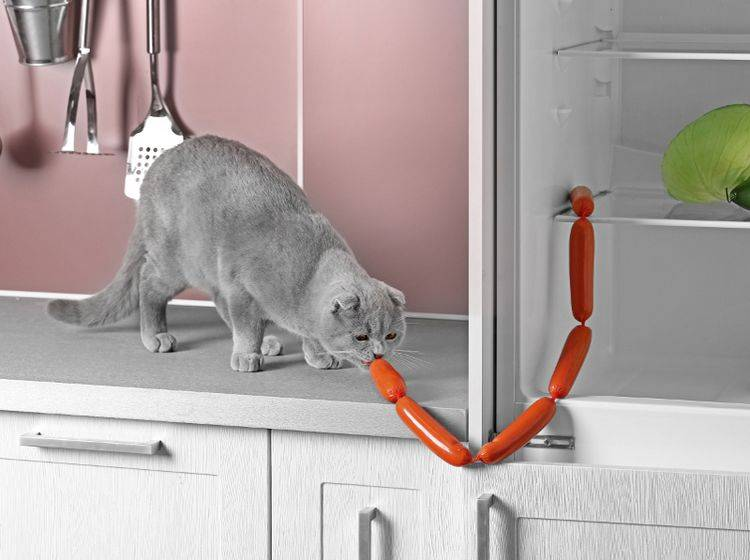 Einige Katzen stellen freche Dinge in der Küche an – Shutterstock / Africa Studio