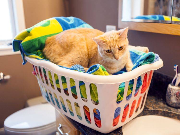Das sieht aber gemütlich aus: Katze im Wäschekorb – Shutterstock / MaxyM