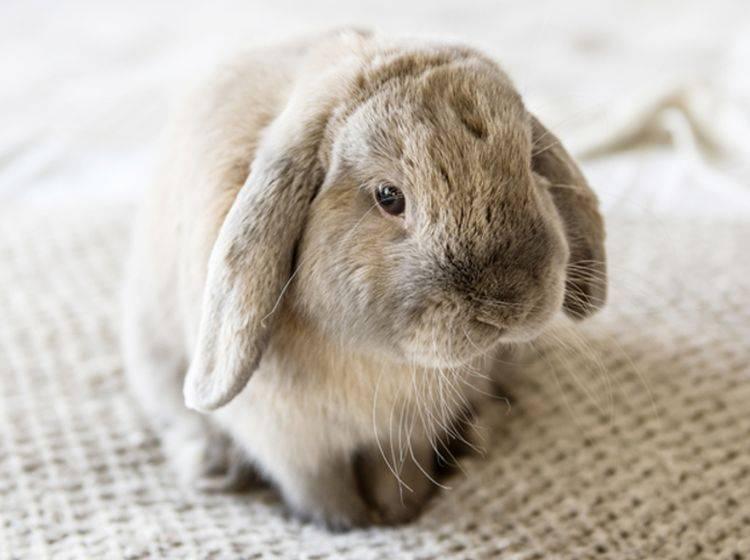 Kaninchenschnupfen kommt besonders häufig in der kalten Jahreszeit vor – shutterstock / Sofiya Stoyakina