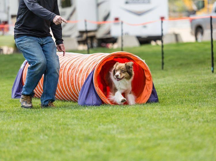 Ein Mobility-Parcours kann ganz unterschiedlich aussehen, individuell auf die Bedürfnisse und Ansprüche der Hunde angepasst – Shutterstock / Elizabeth A.Cummings