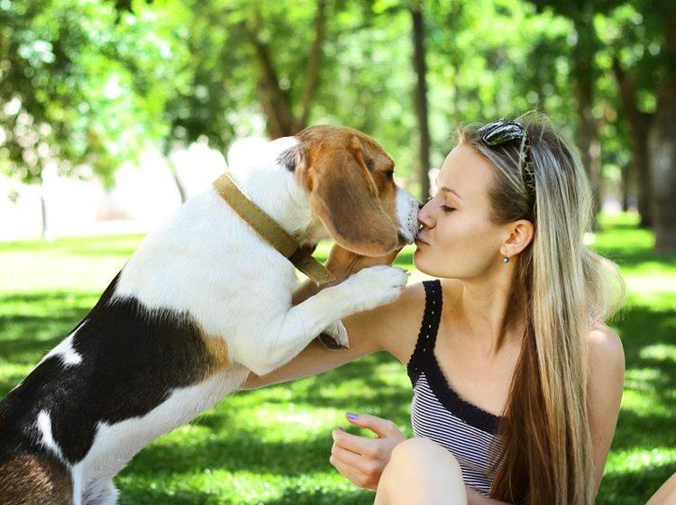 Lieber küssen als schmerzhaft zudrücken – Die Schnauze eines Hundes ist sehr empfindlich – Shutterstock / Viktoria Minkova