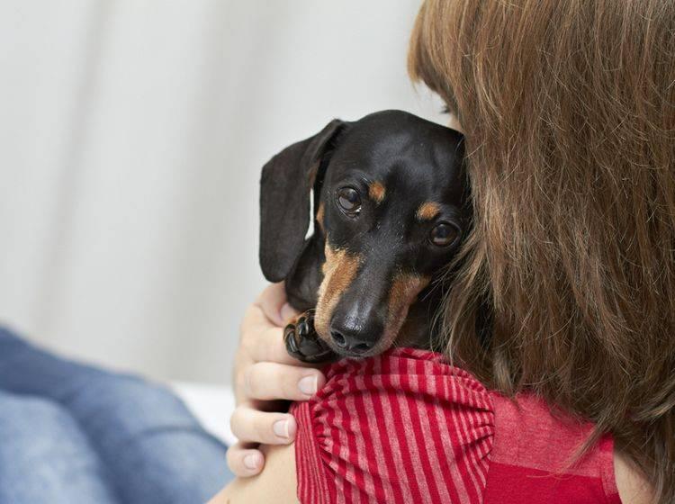 Manchmal brauchen Hunde Geborgenheit und Sicherheit statt Abhärtung – Shutterstock / dogboxstudio