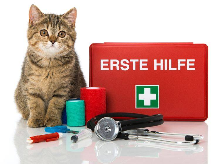 Was gehört eigentlich alles in eine gute Hausapotheke für Katzen? – Shutterstock / Dora Zett