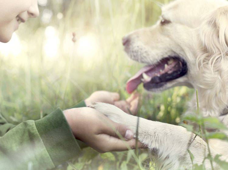 """Hunde sind gegenüber """"ihren"""" Menschen überaus loyal. Shutterstock / FCSCAFEINE"""