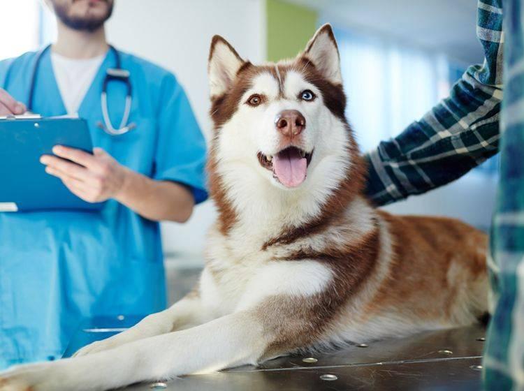 Kohletabletten sind eine wichtige Erste-Hilfe-Maßnahme für Hunde bei Vergiftungen. Sie müssen dennoch umgehend zum Tierarzt – Shutterstock / Pressmaster