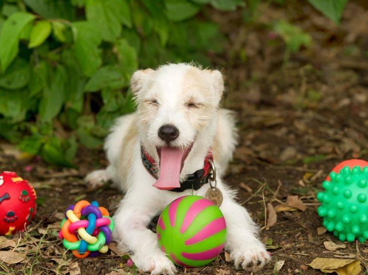 Sicheres und spaßversprechendes Hundespielzeug gehört ebenfalls zu der Grundausstattung für Hunde – Shutterstock / David Porras