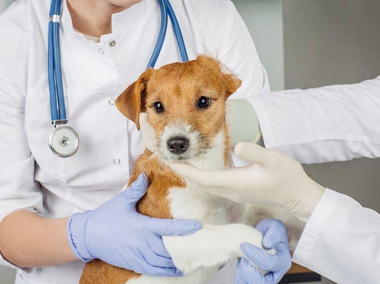 Schon bei den ersten Symptomen von Hepatitis sofort zum Tierarzt – Foto: Shutterstock / NEstudio