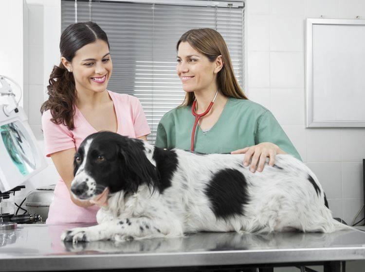 Der Tierarzt kann die Addison-Krankheit beim Hund mit einer Hormonersatztherapie behandeln – Shutterstock / Tyler Olson