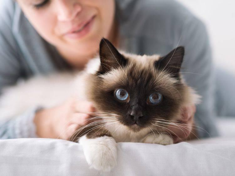 Therapiekatzen helfen Menschen bereits durch ihre Anwesenheit dabei, seelische Probleme besser zu bewältigen – Shutterstock / Stock-Asso