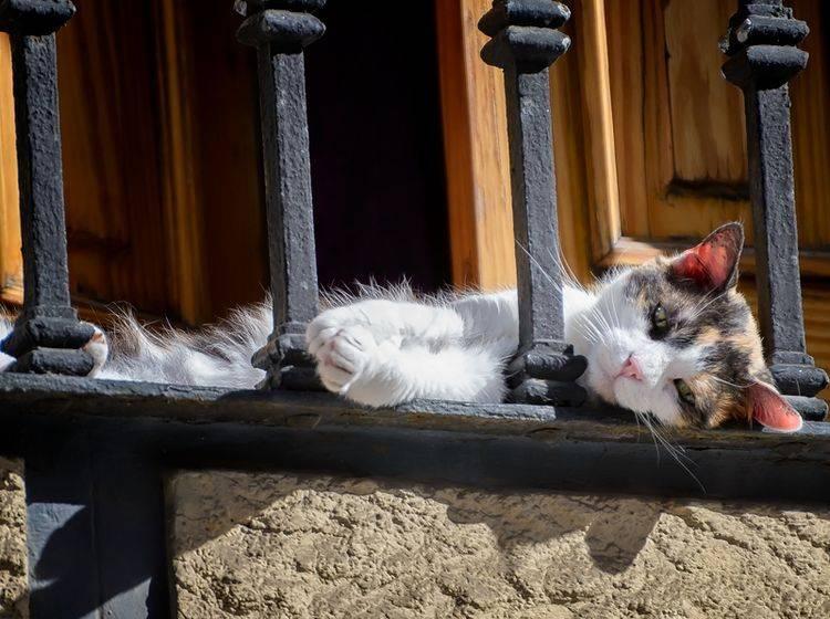 Ein schöner Platz für Katzen: der Balkon – Shutterstock / Ed-Ni-Photo