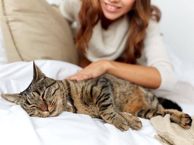 """""""Schnurr, ist das schön!"""", scheint diese glückliche Tabby-Katze zu denken – Shutterstock / Syda Productions"""