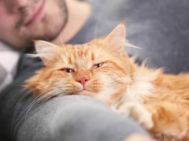 Als Katzenpflegestelle umsorgen Sie Ihren flauschigen Schützling, bis er ein dauerhaftes Zuhause gefunden hat – Shutterstock / Africa Studio