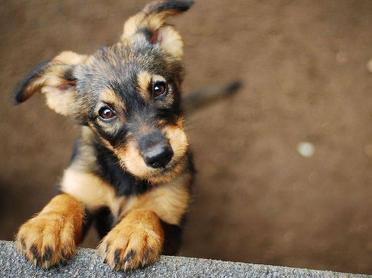 Was beeinflusst die Lebenserwartung von Hunden? – Bild: Shutterstock / Monika Chodak