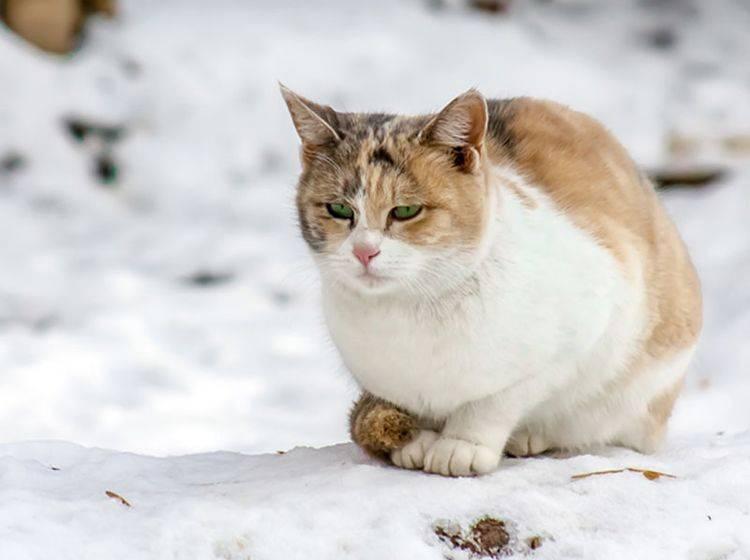 Untertemperatur Katze