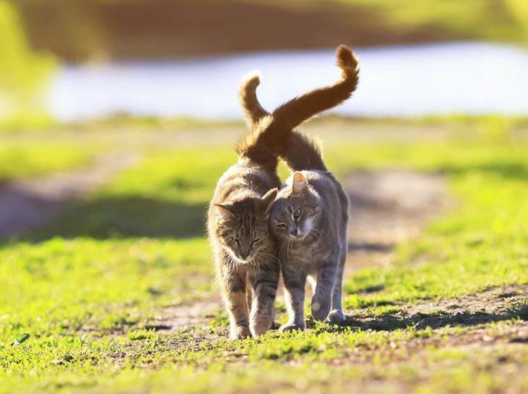 Katzen brauchen ihre Freunde, weil ... mit ihnen nie ein Ausflug ins Wasser fällt — Bild: Shutterstock / Bachkova Natalia