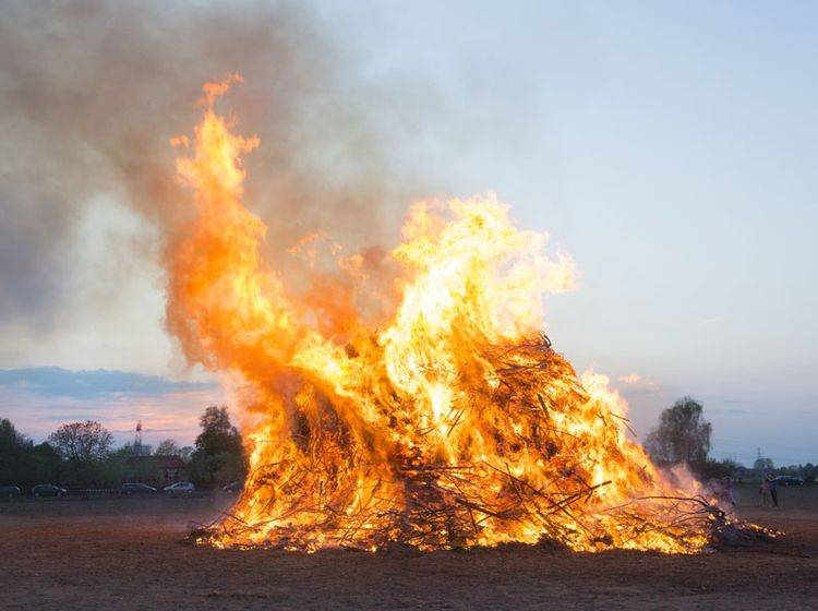 Für welche Tiere stellt das Osterfeuer eine Gefahr dar? - Bild: Shutterstock / Ivonne Wierink