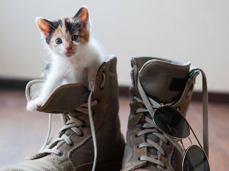 """""""Ich will auch mal mit dir wandern gehen, Mensch!"""" - Bild: Shutterstock / PolinaBright"""