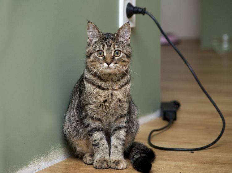 Wenn Kabel vor Ihrer Katze nicht mehr sicher sind, dann können Zahnprobleme die Ursache sein - Bild: Shutterstock / OKcamera