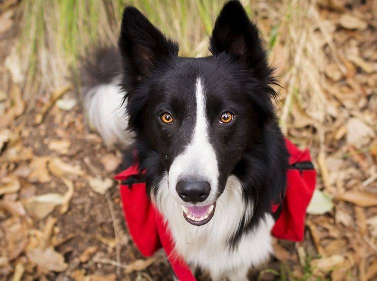 Welche Ausrüstung braucht man, wenn man mit dem Hund wandern geht? - Bild: Shutterstock / jos macouzet