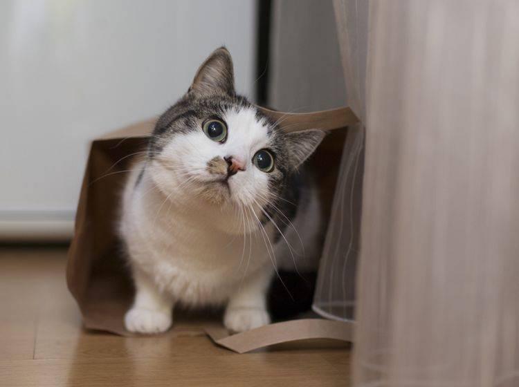 """""""Was es wohl mit Geheimnissen zu tun hat, wenn Katzen aus dem Sack gelassen werden?"""", wundert sich diese Fellnase – Shutterstock / kmsh"""