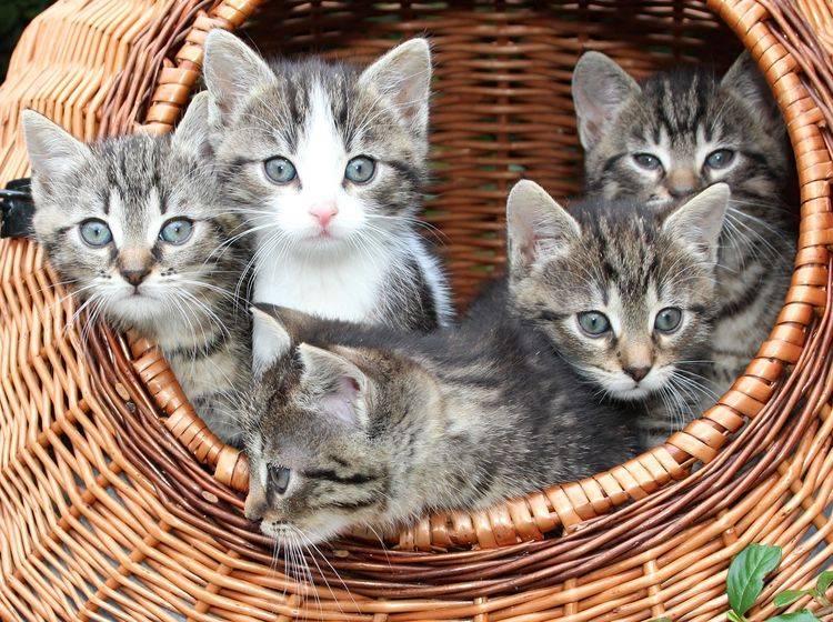 Babykätzchen kuscheln in einem Korb
