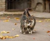 Katzen wissen: Liebe ist etwas Wundervolles! – Shutterstock / Oleg Shishkunov