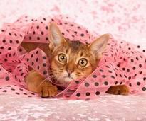 Behalten Sie Ihr Haustier im Auge, wenn es mit Geschenkband spielt – Shutterstock / Linn Currie