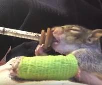 Ein Eichhörnchen im grünen Gips begeistert das Netz - Bild: YouTube / Orphaned Wildlife Center
