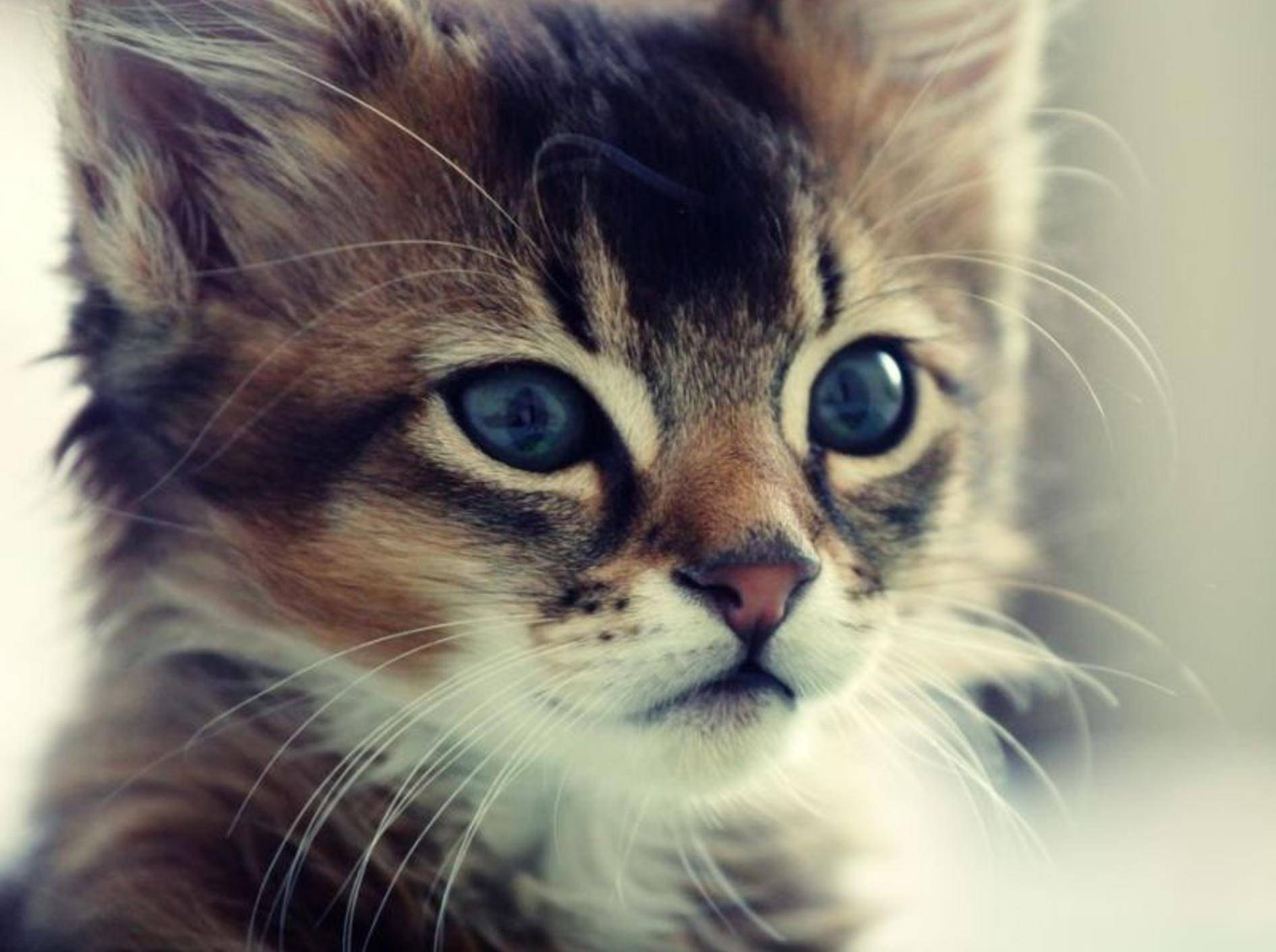 Junge Katze in Nahaufnahme