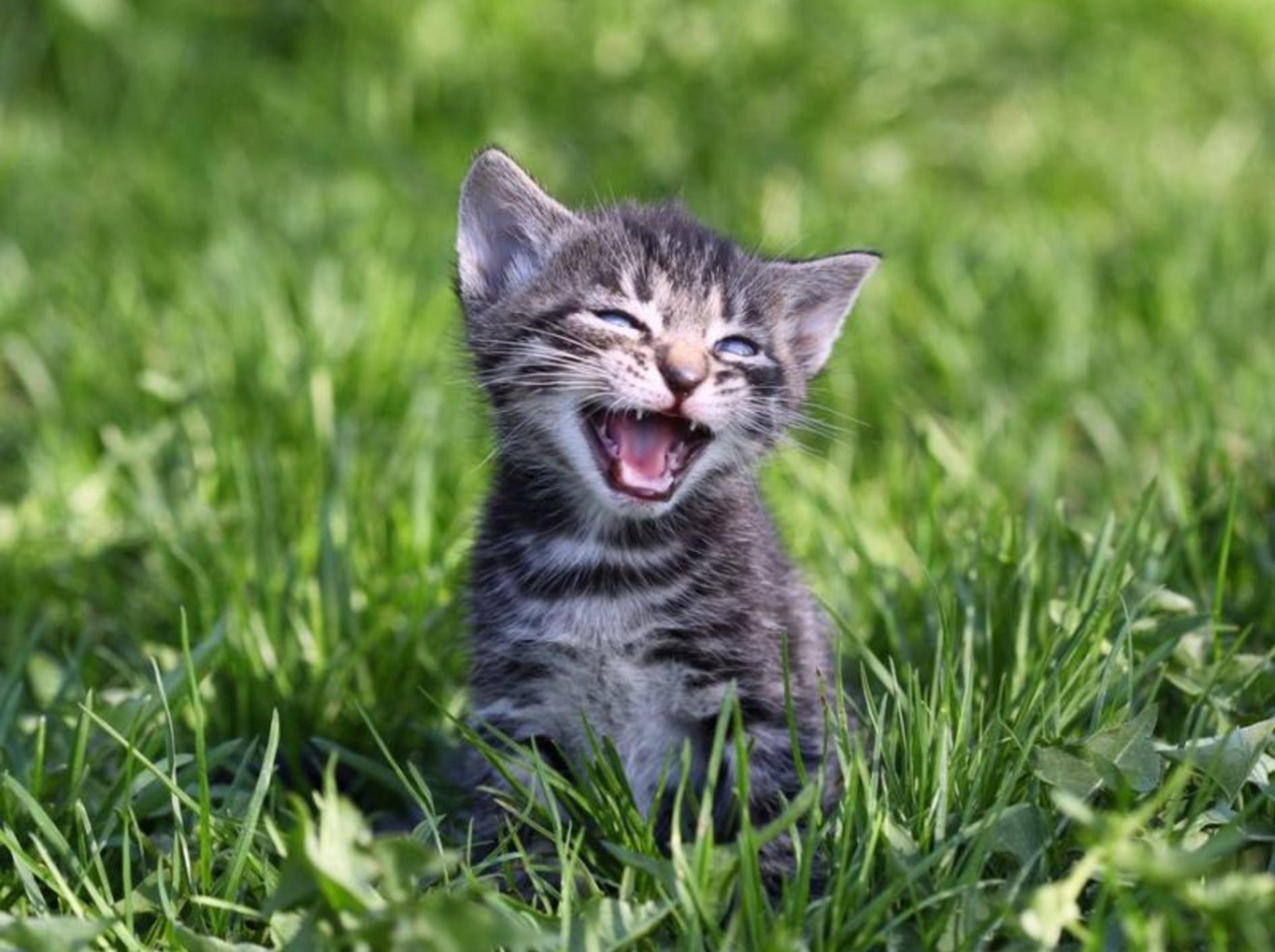 Junge getigerte Katze auf der Wiese