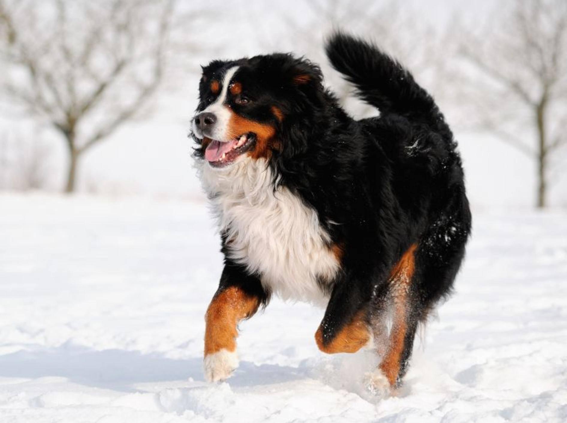 Hundepfoten vor Eis, Sand und Streusalz schützen