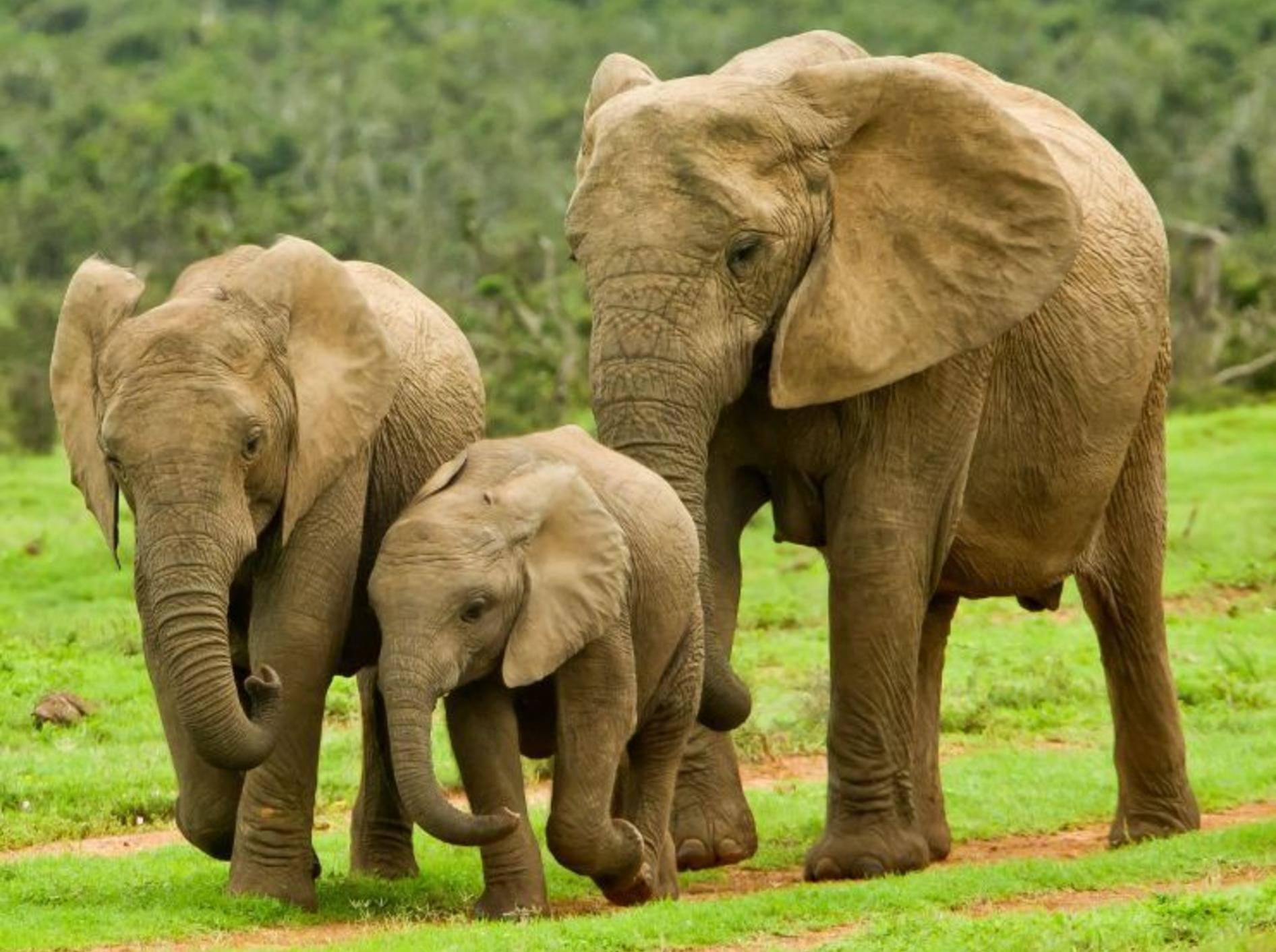 Elefanten Familie auf der Wiese