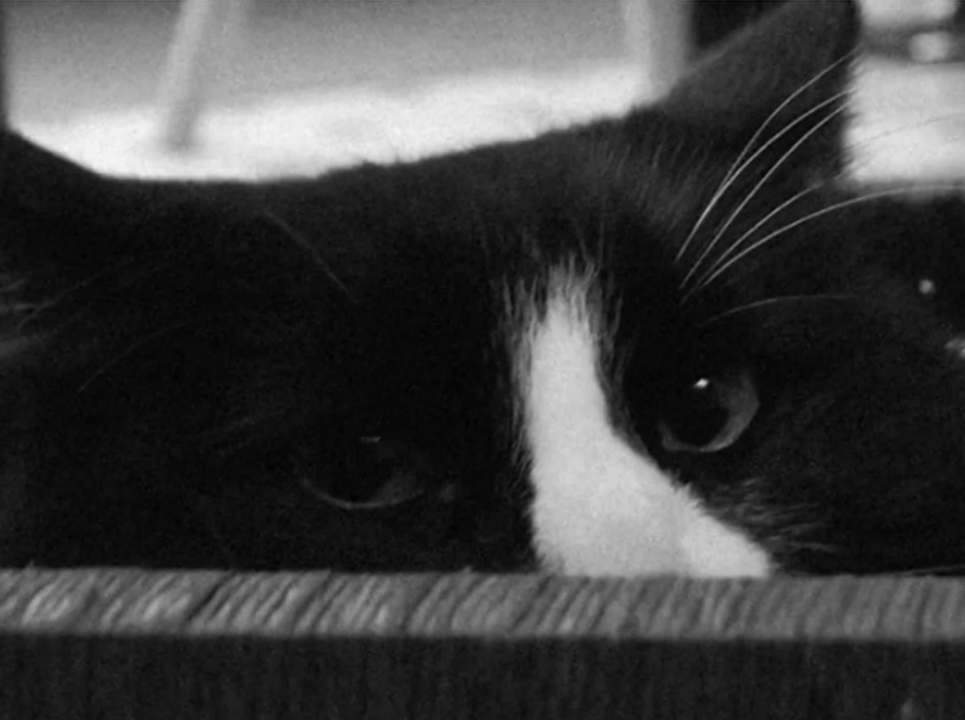 Emo-Katze Henri: Latent depressiv, aber trotzdem ein Gewinner