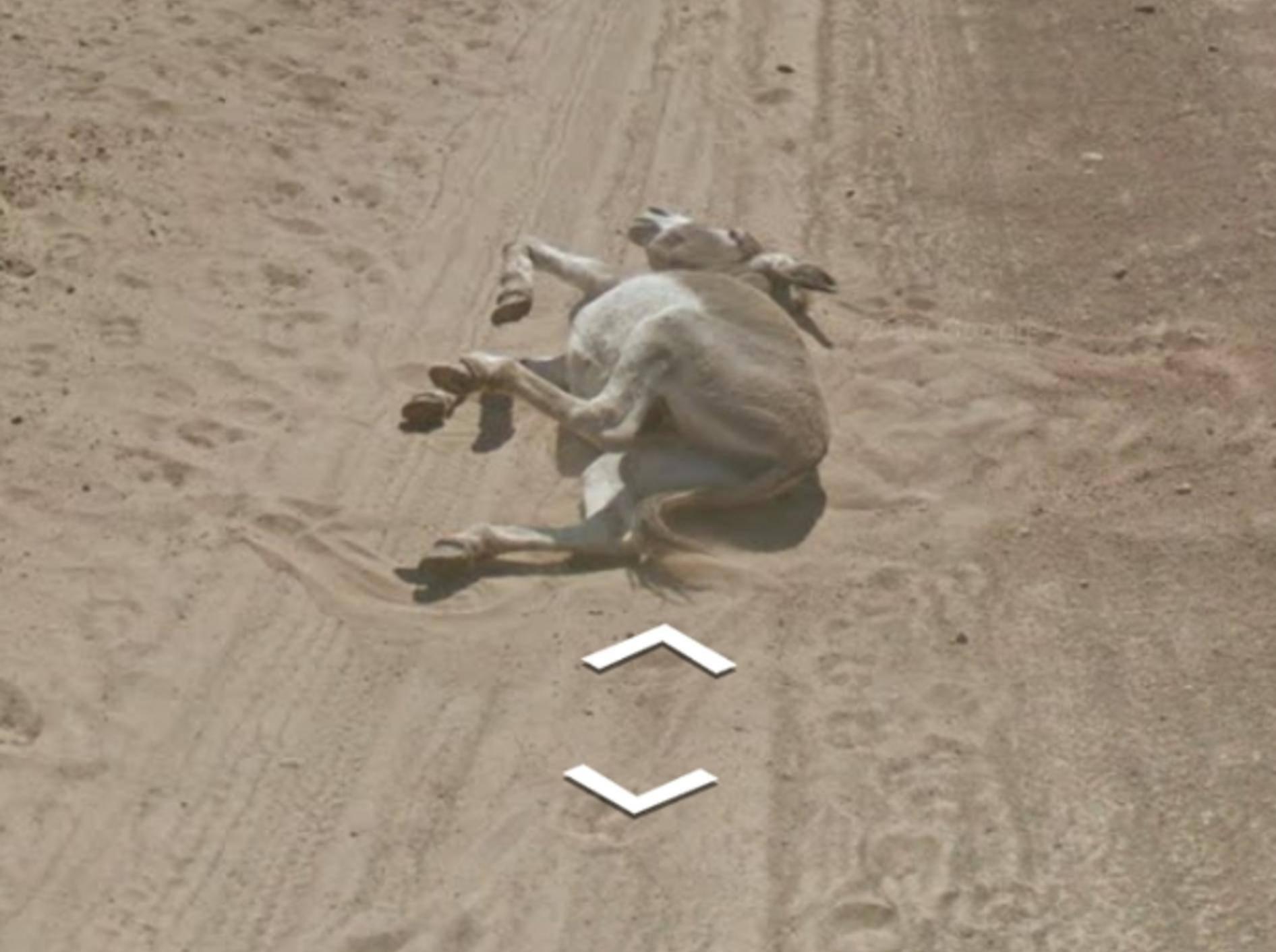 Hier scheint der Esel tot im Staub zu liegen
