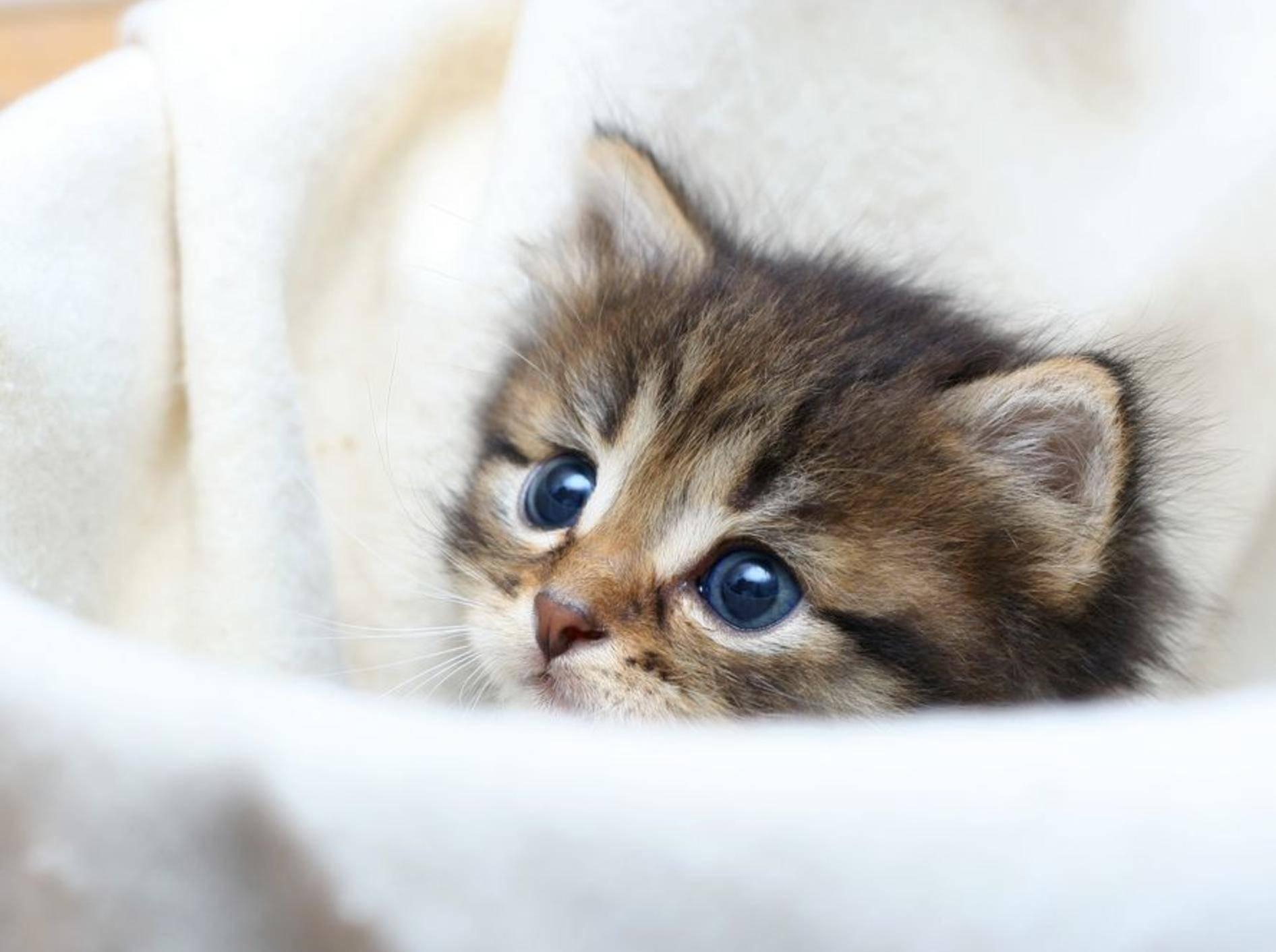 Getigerte-Katze-Baby-Decke