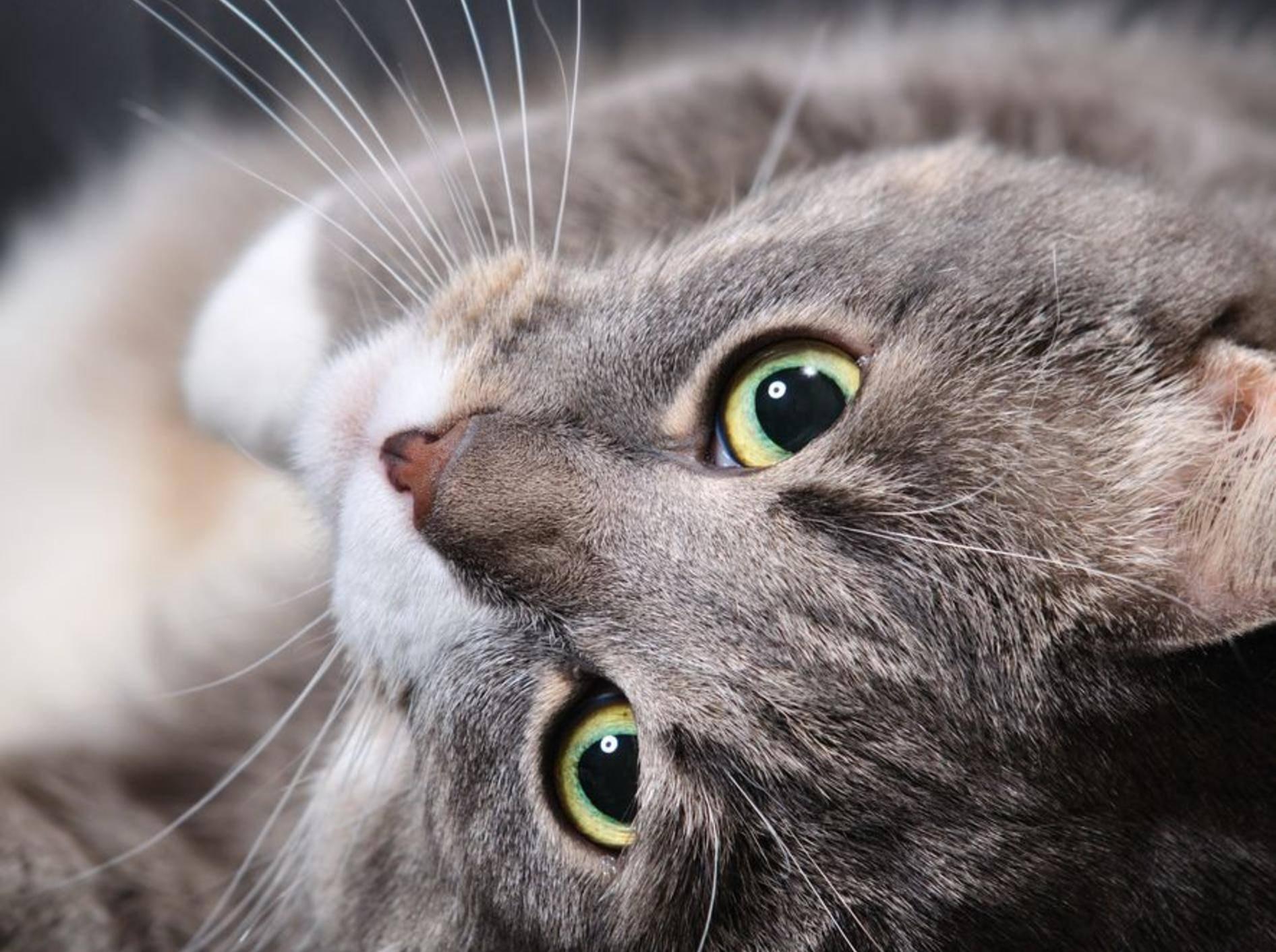 Trauer um die geliebte Katze: Kommt Tierpräparation infrage? – Bild: Shutterstock