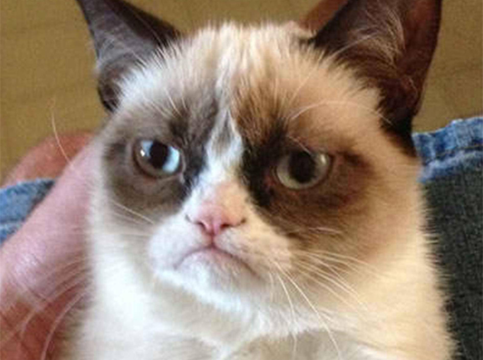 Grumpy Cat zur wichtigsten Katze 2012 gewählt