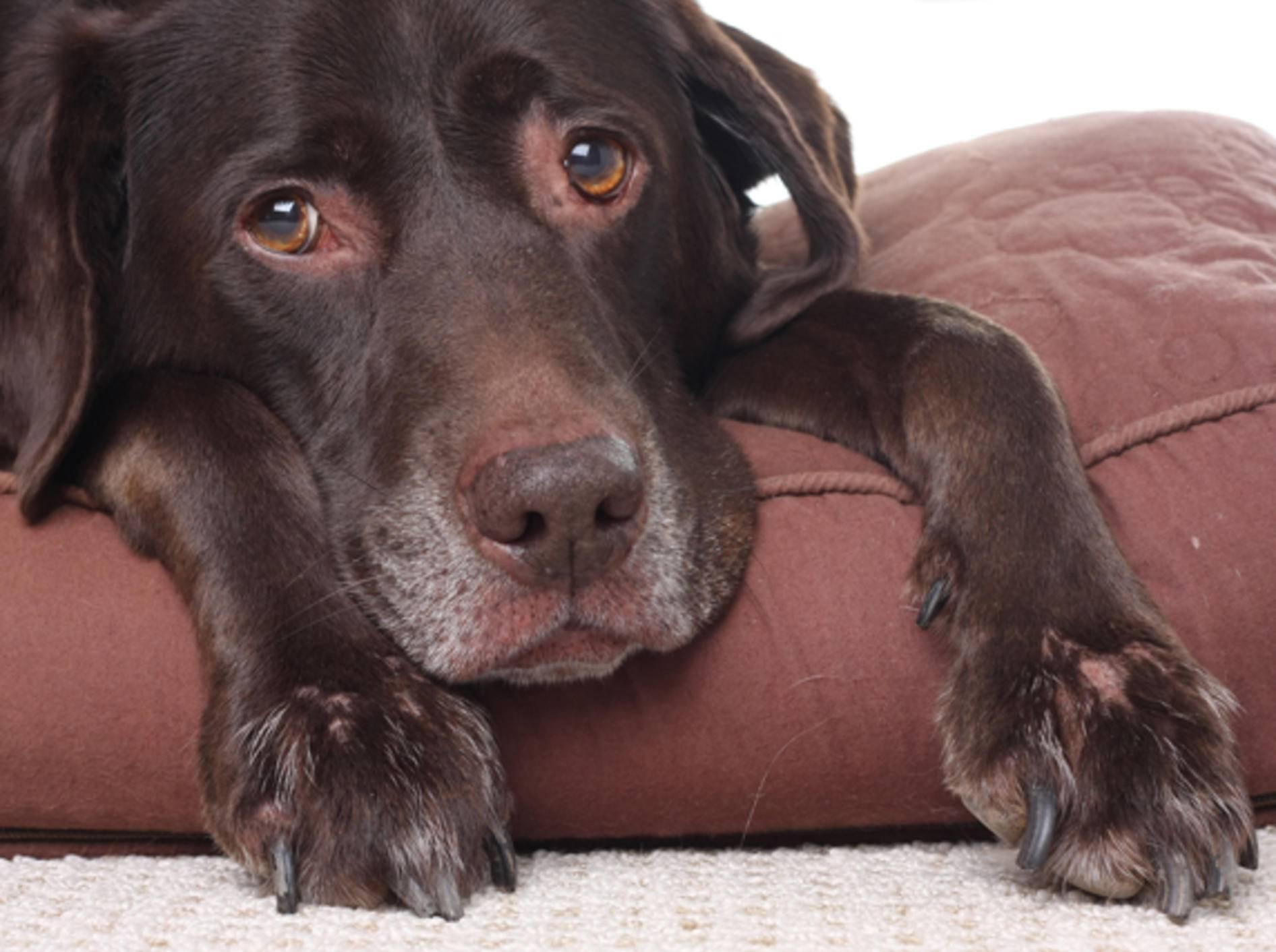 Silvester: So kommen Haustiere stressfrei ins neue Jahr