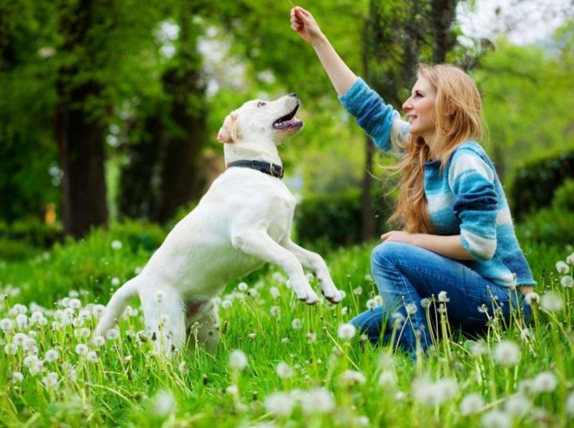 Labrador spielt mit Frau auf der Wiese