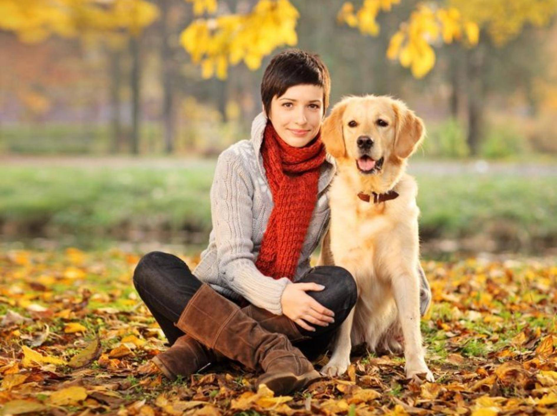 Ein guter Hundesitter sollte sich mit Hunden richtig gut auskennen – Foto: Shutterstock / Ljupco Smokovski