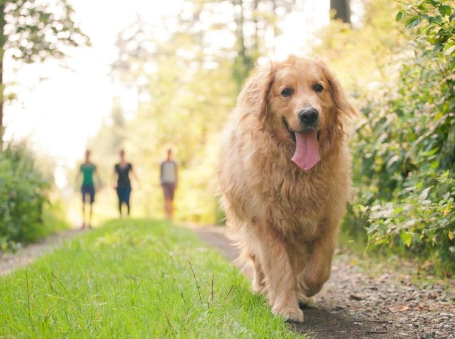 Hund auf der Wiese mit Joggern