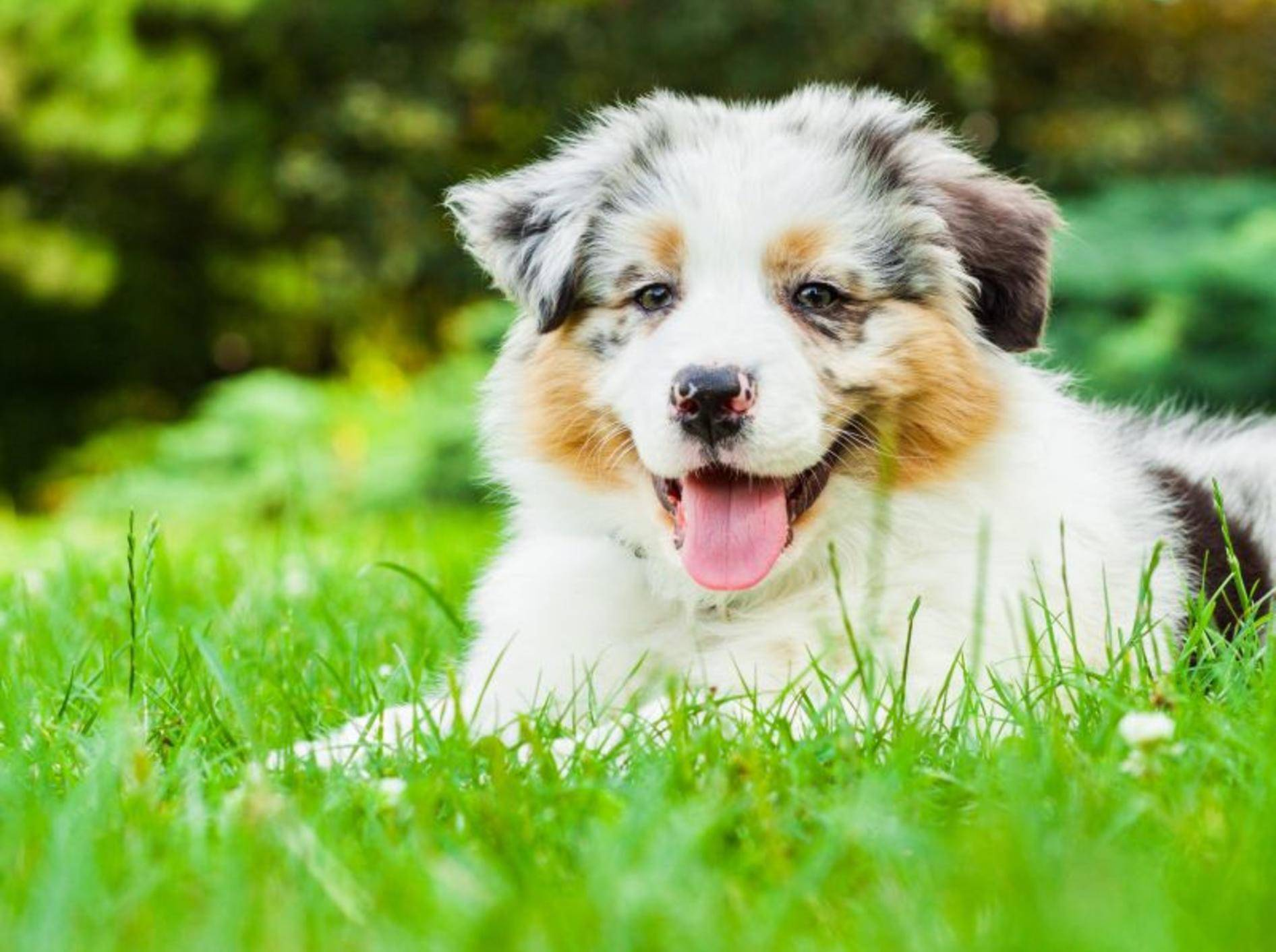 Hund-Liegend-Wiese