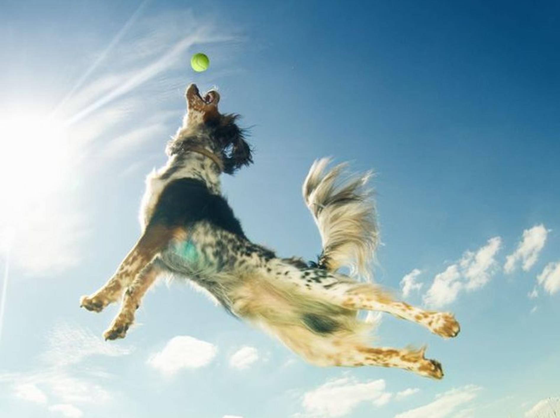Mischlingshund springt hoch hinaus, um einen Ball zu fangen.