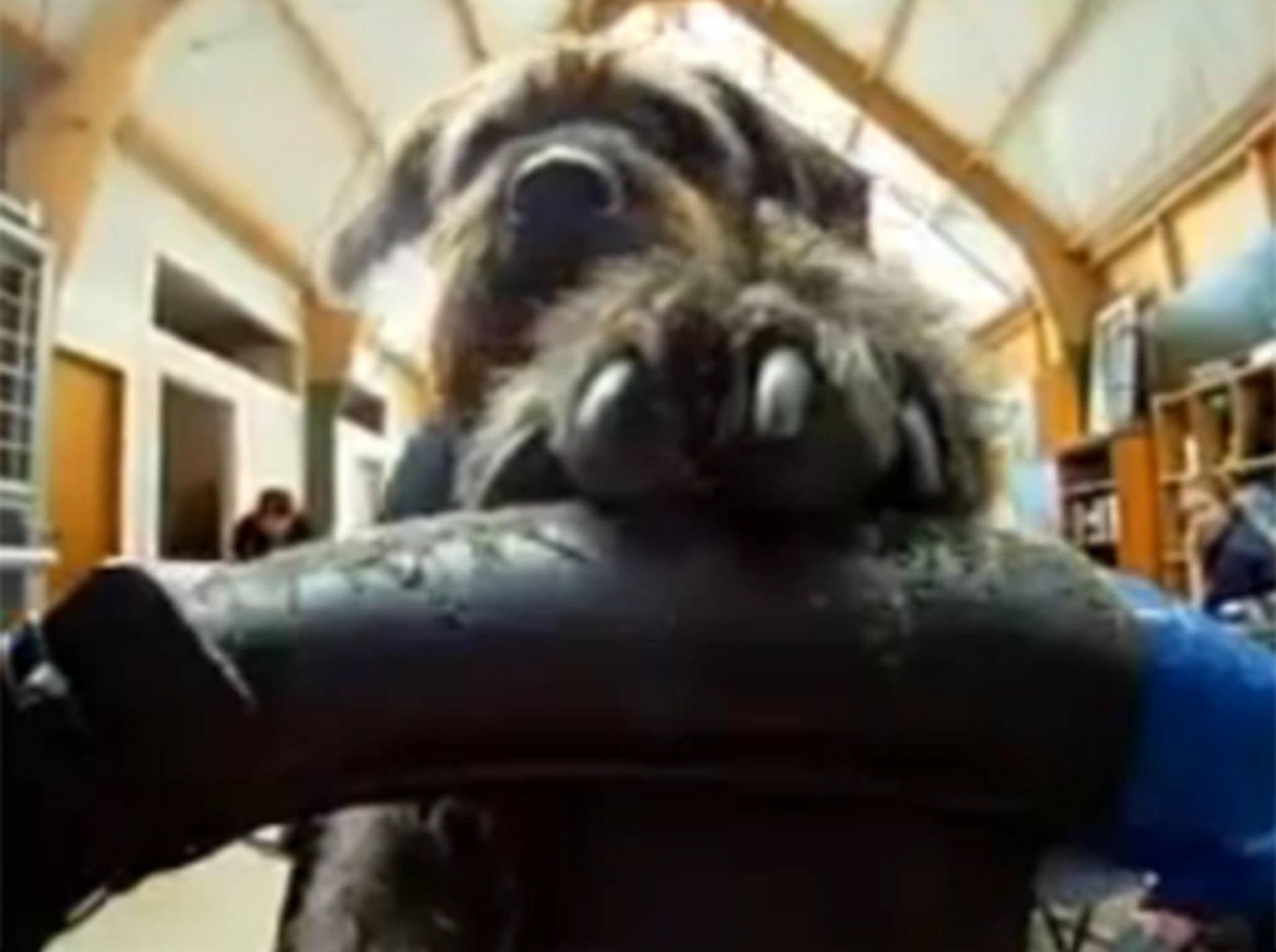 Hund am Steuer: Dieser Vierbeiner ist ein sicherer Autofahrer
