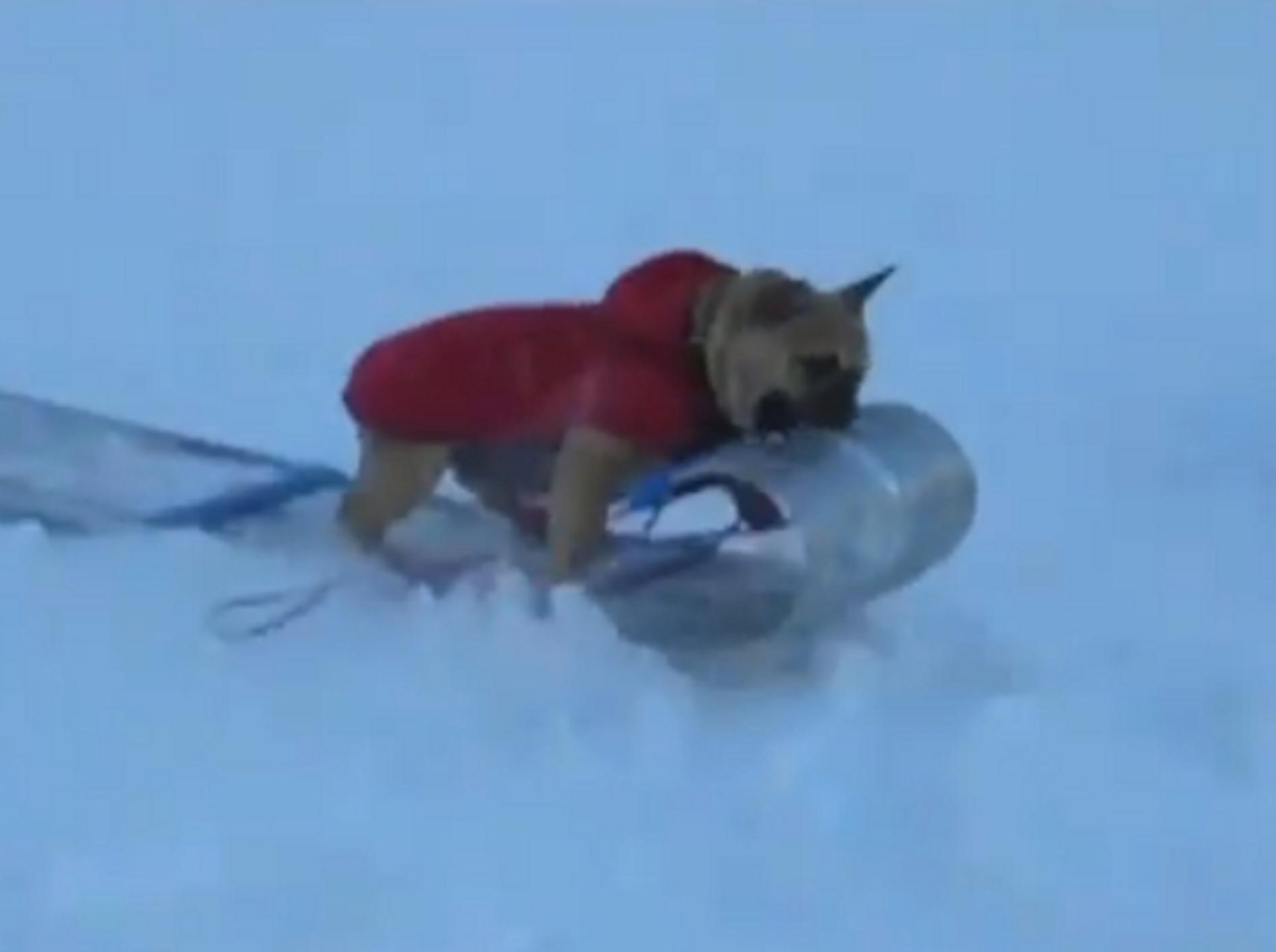 Hunde im Schnee: Immer bergab!