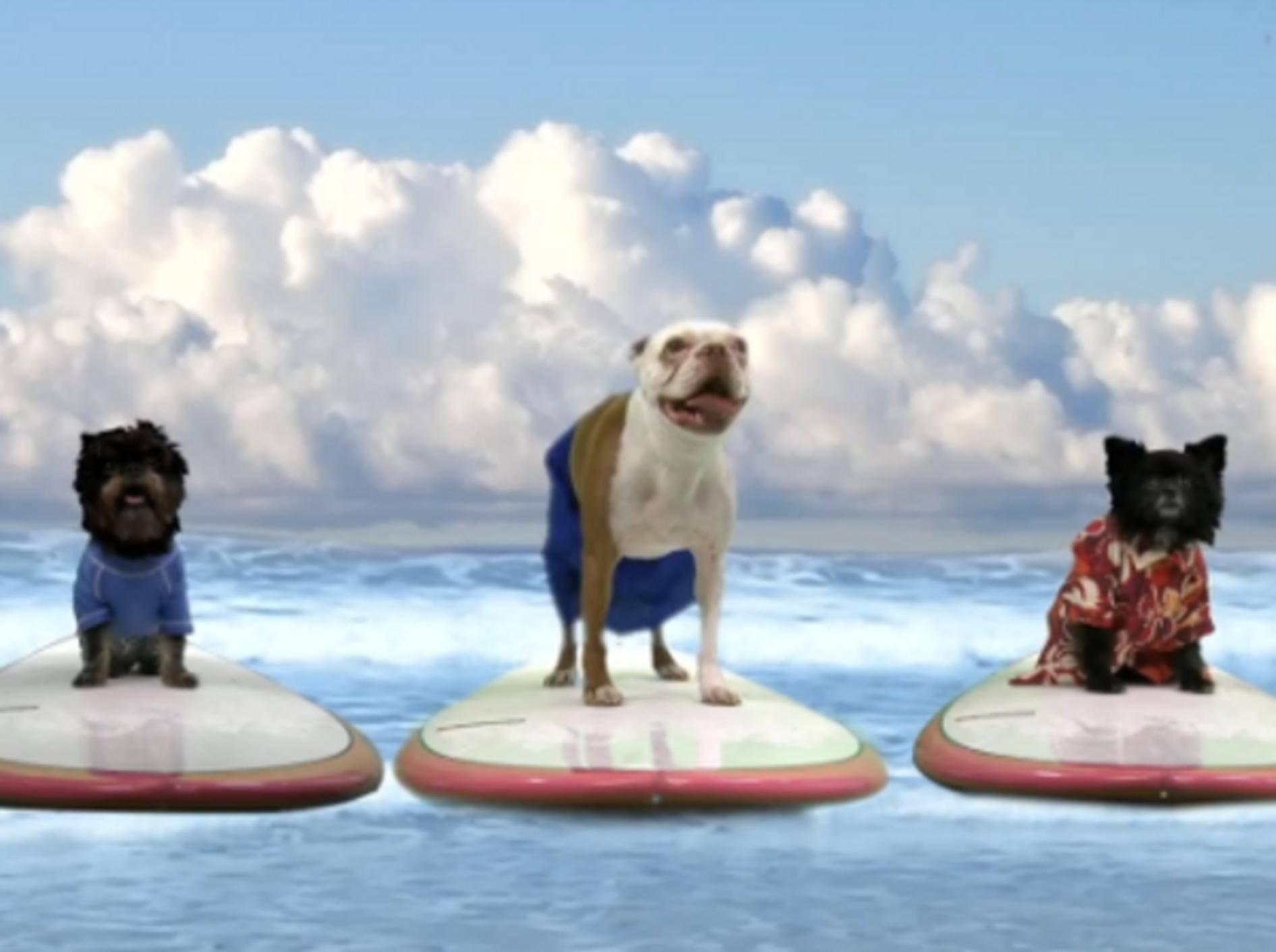 Pup Direction: Tierische Boyband bringt Hunde-Teenies zum Kreischen