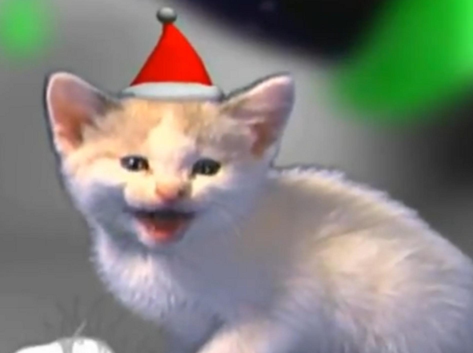 Jingle Cats: Katzen miauen Weihnachtsliede